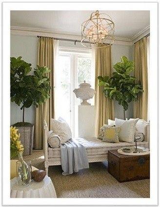 Balatoni_Növények a lakásban
