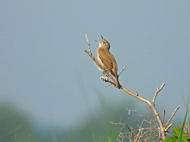 Milinte Judit, természet, madár
