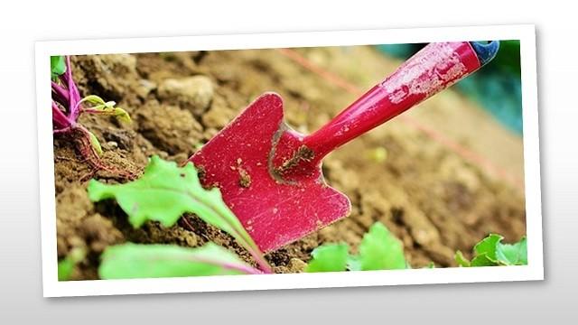 Egészség a kertjeinkben is – őszi feladatok