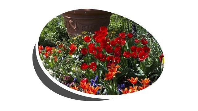 Nárcisz, jácint, tulipán
